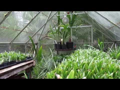How To Palm Seed Germination Using the Baggy Method