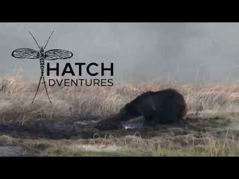 Hatch Adventures Wild Things - Grizzly Bear Pulls Bison From Mud