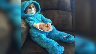 YOU have NEVER seen ANYTHHING FUNNIER and CUTER than this! - Funny CAT compilation