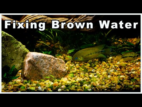 What To Do When Your Aquarium Water Turns Brown After Adding Driftwood | Will It Hurt Your Fish?