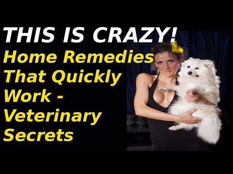 Veterinary Secrets - Dog Pain: Home Remedies That Quickly Work - Veterinary Secrets