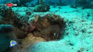 Mavi Tutku Kızıl Deniz 2