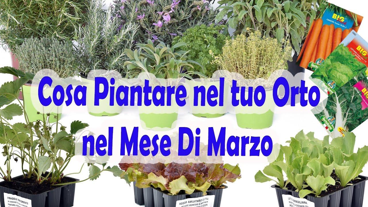 Cosa piantare nel mio orto a marzo youtube for Cosa piantare nell orto adesso