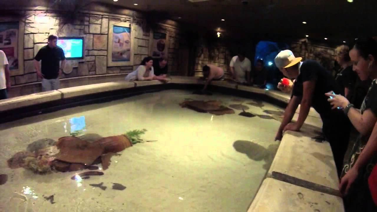 Shark Reef Aquarium FULL TOUR!! HD POV Mandalay Bay, Las ...