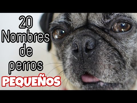 20 Nombres para perros macho pequeños 🐶