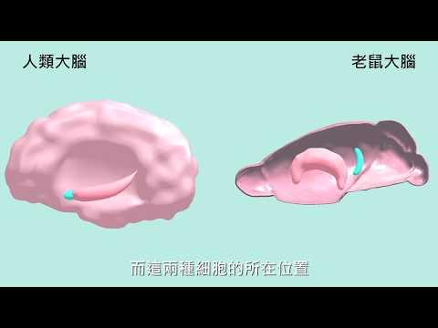 生醫光電與運動科技用於失智症之教育資源開發與推廣-失智症