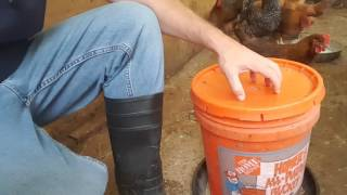 BEST CHEAP CHICKEN WATERER AND FEEDER TO RAISE BACKYARD CHICKENS LESS THAN $5