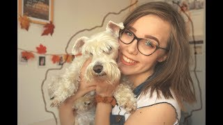 20 Things I Love About My Miniature Schnauzer | vilmabrownie