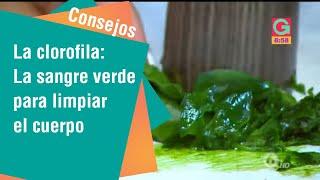 La clorofila, la sangre verde para limpiar nuestro cuerpo