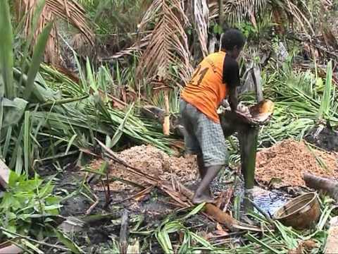 preparing sago - Uwus Asmat Papua