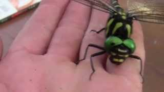 Video Teeth of the Dragonfly download MP3, 3GP, MP4, WEBM, AVI, FLV September 2017