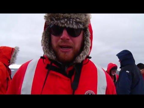 Killer Whales Feeding on Penguins in Antarctica