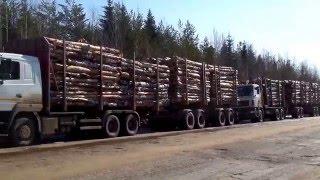 Владельцы большегрузов устроили на дорогах региона настоящую вакханалию