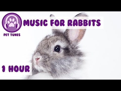 1 Hour of Rabbit Relaxation Music for Your Bunny