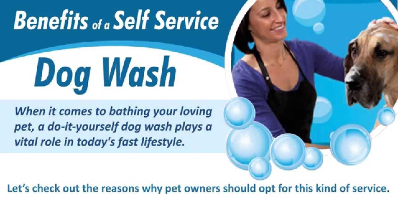 Benefits of a self service dog wash youtube benefits of a self service dog wash solutioingenieria Choice Image