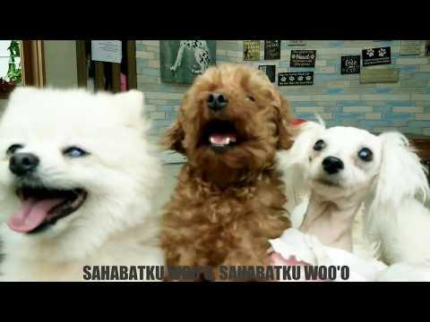 GINGGA BURGER - SAHABAT (UNOFFICIAL VIDEO CLIP + LYRICS MELODIC POP PUNK)