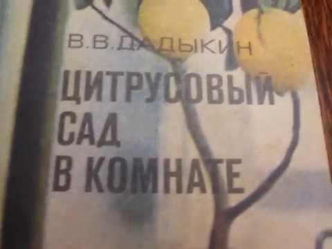 Старая инструкция по содержанию лимона в комнате