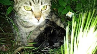 CAT MOTHER Calling her kittens...