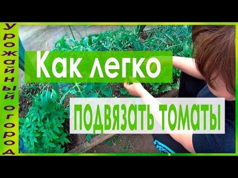Как правильно пасынковать томаты Сайт о саде, даче и
