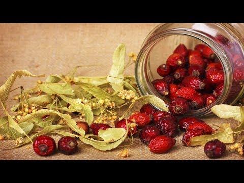 Плоды шиповника: лечебные свойства и противопоказания. Как
