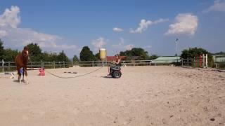 Segway Rollstuhl Freee F2 und ein Pferd | Segway wheelchair Freee F2 and a horse