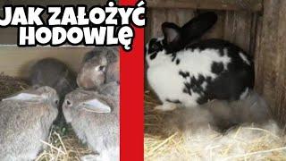Jak założyć hodowlę królików ?? (Poradnik)