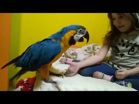 Вопрос: Как дрессировать попугая?