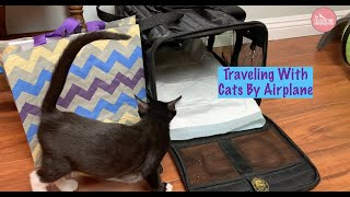 Traveling By Plane With Your Cat