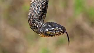 Top 10's Most Dangerous animals In The World