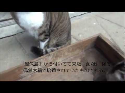 菌糸体=mycelium=の貌 1月 25日, 2012年:竹酔庵