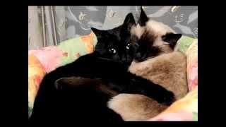 Прикольные фотографии котов и кошек