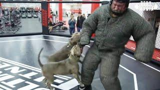 Макс Новосёлов против питбулей!
