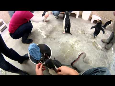 [Highlight Reel] Feeding Penguins @ The Detroit Zoo Penguin Conservation Center