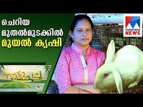 Rabbit farm of Reena Fransis in Nattupacha  | Manorama News