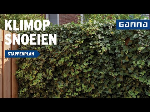 klimop snoeien - tuintip oktober   gamma belgië - youtube
