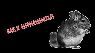 Мех шиншиллы от Chinchilla. Fur. Ukraine