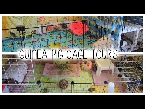 Guinea Pig C&C Cage Tours  - 2015