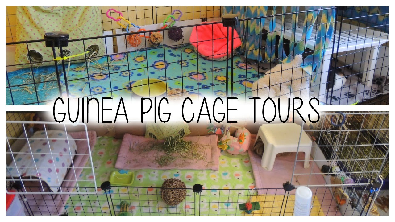 Guinea pig c c cage tours 2015 youtube for Making a c c cage