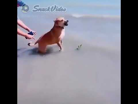 ? funny dog