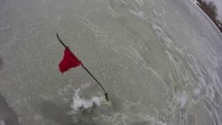 Развеселая рыбалка на жерлицы (флажки) на Волме. Конец января 2017.