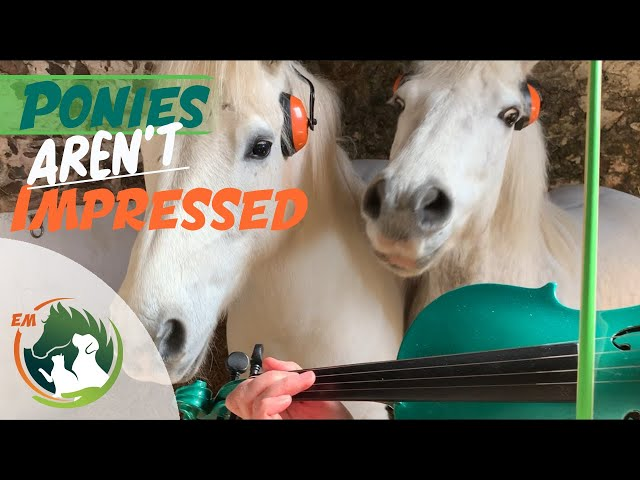 Ponies NOT impressed with my Violin playing! | St Patrick's Day | Cute |Funny Animals