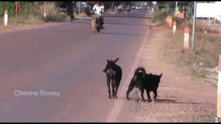 Happy Holiday Street Dogs Black Pharaoh Hound Meeting Portuguese Po...