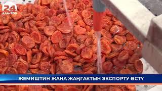 Кыргызстанда жемиштин жана жаңгактын экспорту өстү