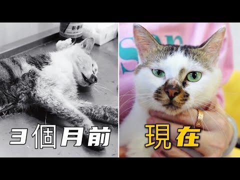 3個月過去了,那隻被人虐至瀕死的小貓咪現在怎麼樣了?| 李喜貓