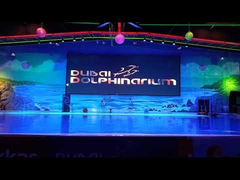 Dolphin show at Dubai Dolphinarium at Creek Park Dubai with Rayyan 2021