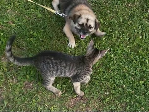 Cats and Dogs CAN be best friends