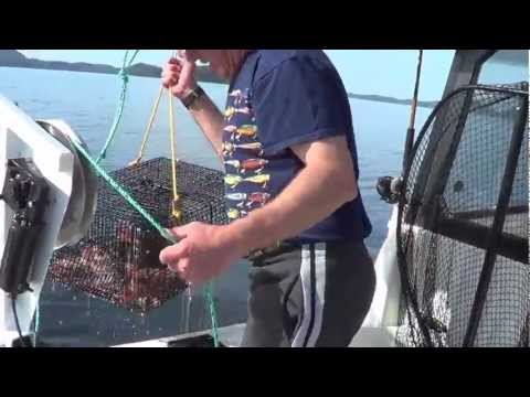 how to catch prawns in bc