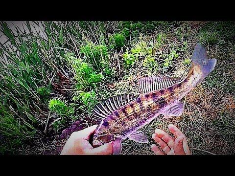 рыбалка знакомство с рыбаками кременчуна