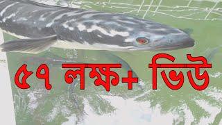 দ খ ন শ হ জ ল ল র ম জ র র ব র ট বড ভয ঙ কর গজ র ম ছ র ভ ড ও sylhet shah jalal ra s majar
