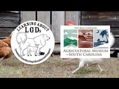 Learning About LGDs OnSite: LGD and Poultry